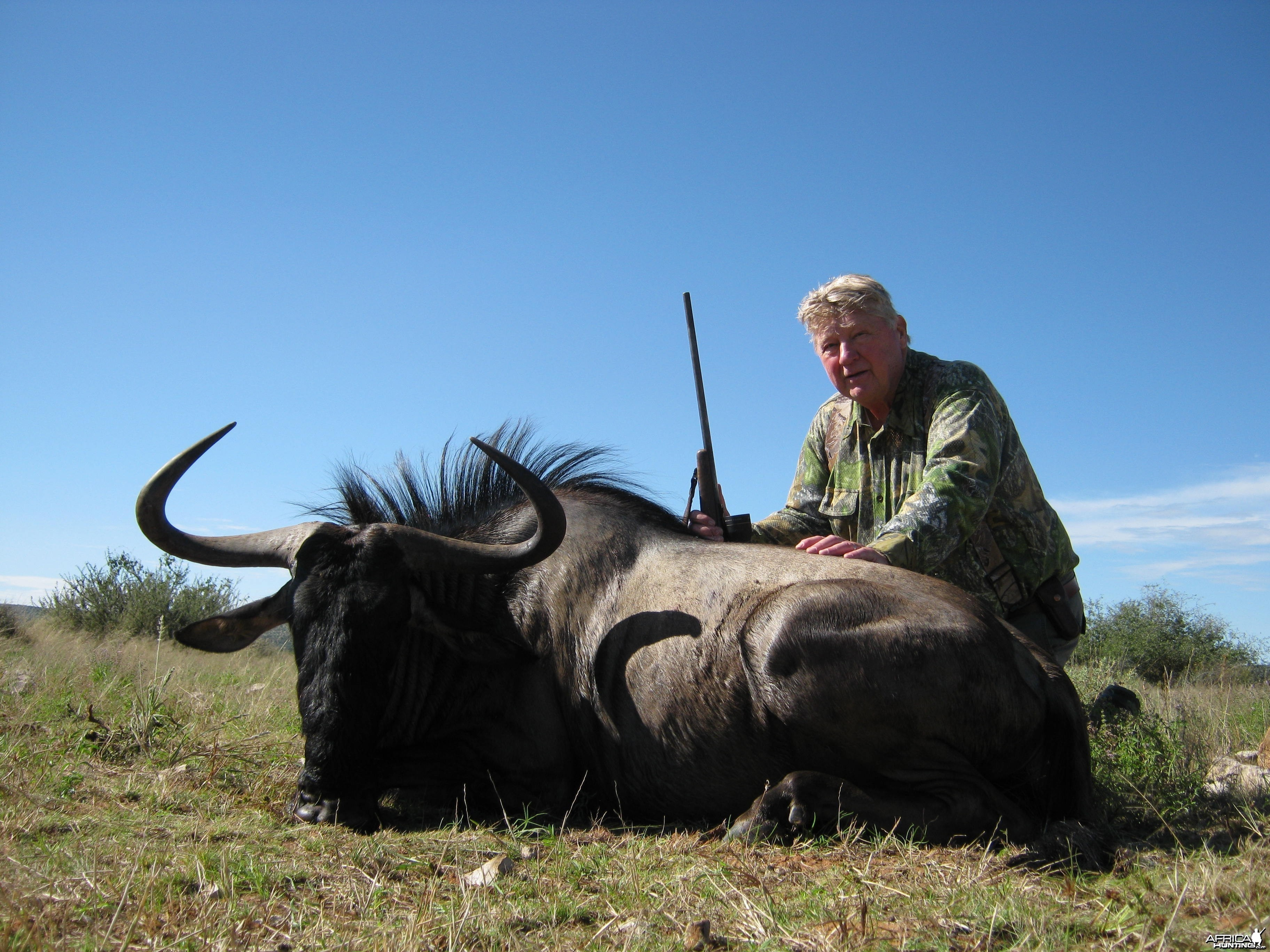 Blue wildebeest with Kowas Hunting Safaris