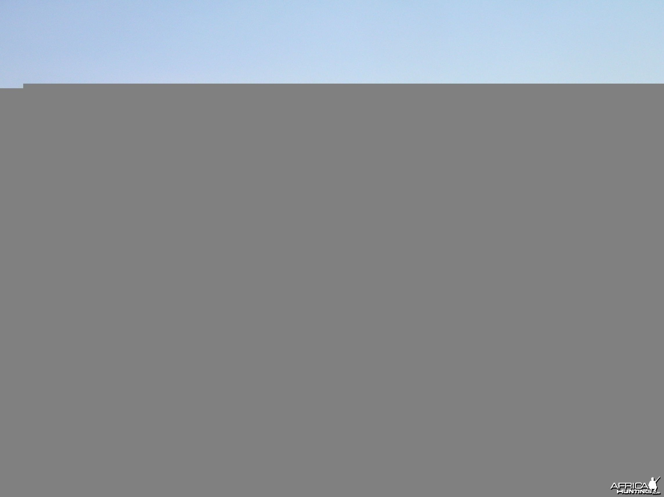 Giraffe Hunting in Namibia