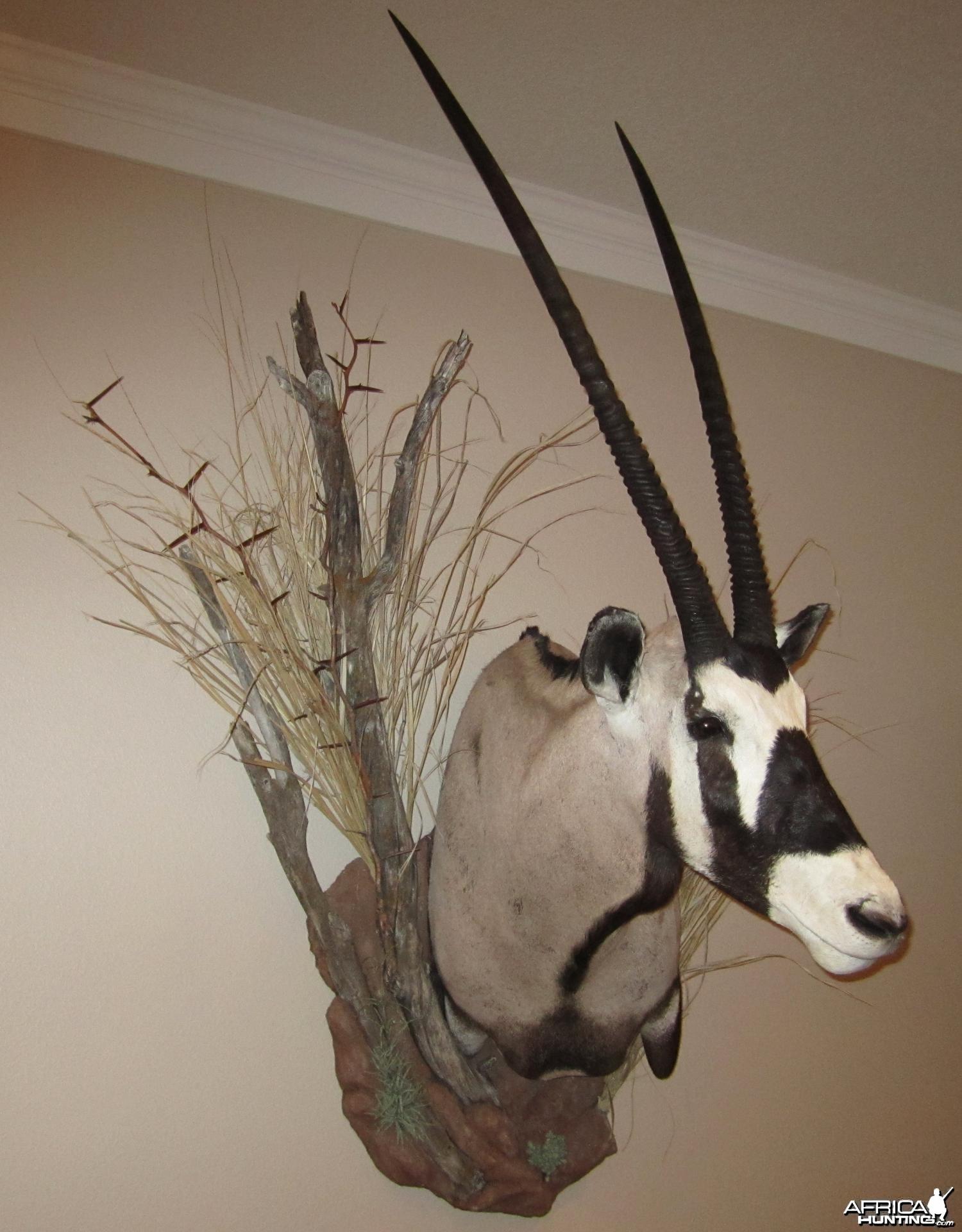 Gemsbok mount
