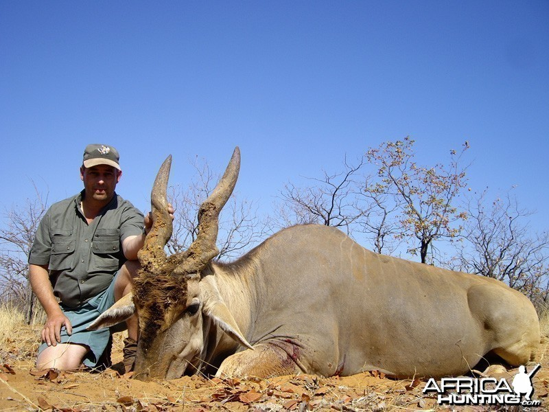 Eland hunted in Zimbabwe