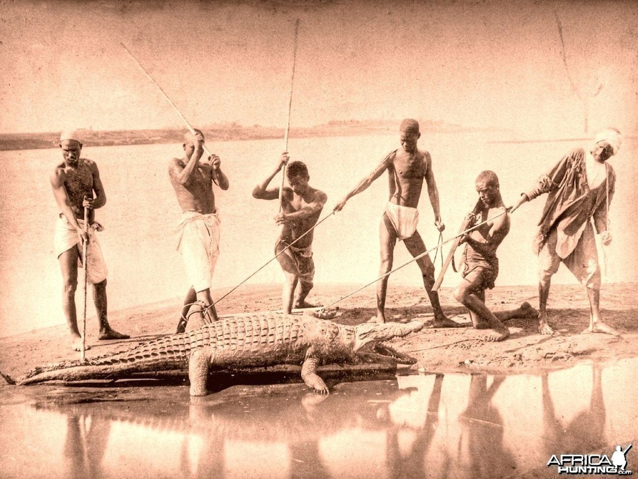 Crocodile hunting at the Nile