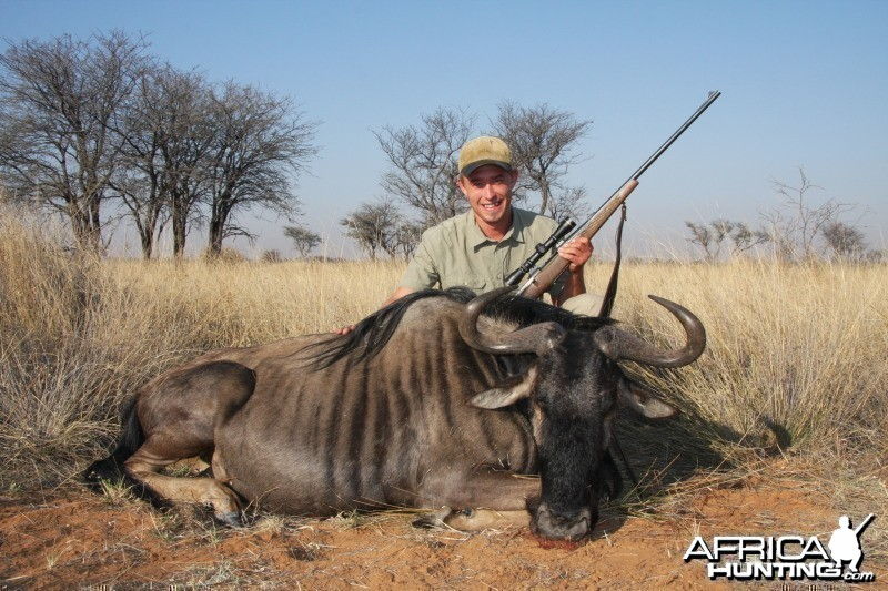 Blue Wildebeest hunted in Namibia