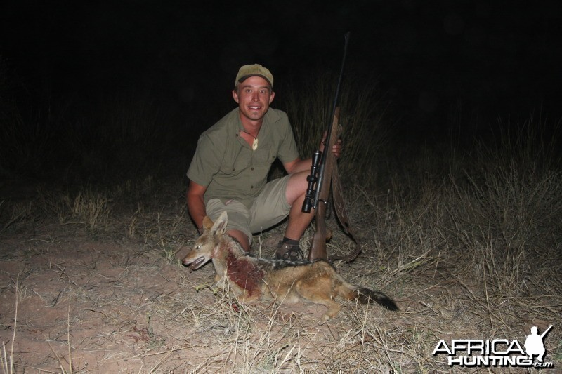 Jackal hunted in Namibia