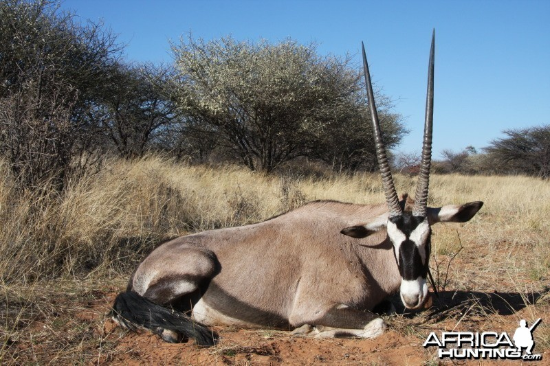 Gemsbok hunted in Namibia