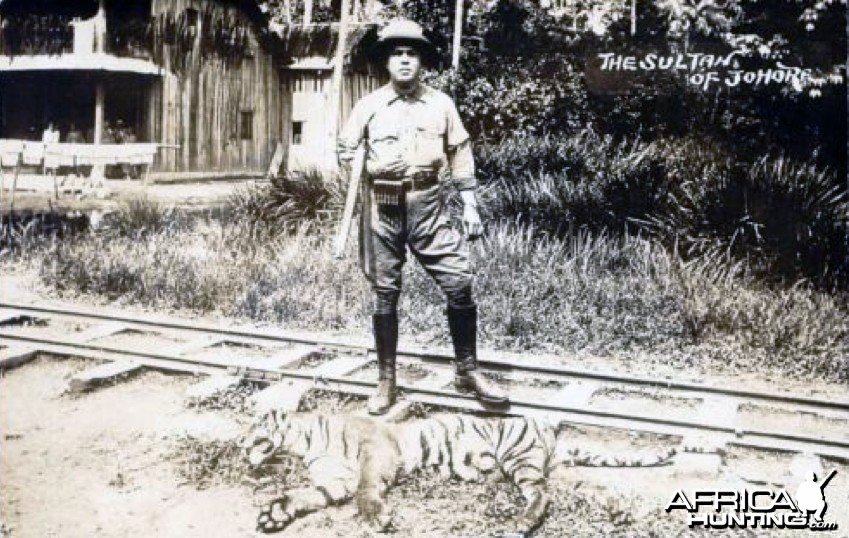 Sultan Ibrahim of Johore Hunting Tiger in Malaysia