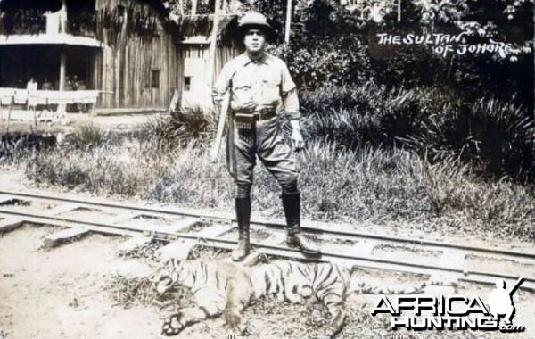 Sultan Ibrahim of Johore Hunting Tiger in Malaysia