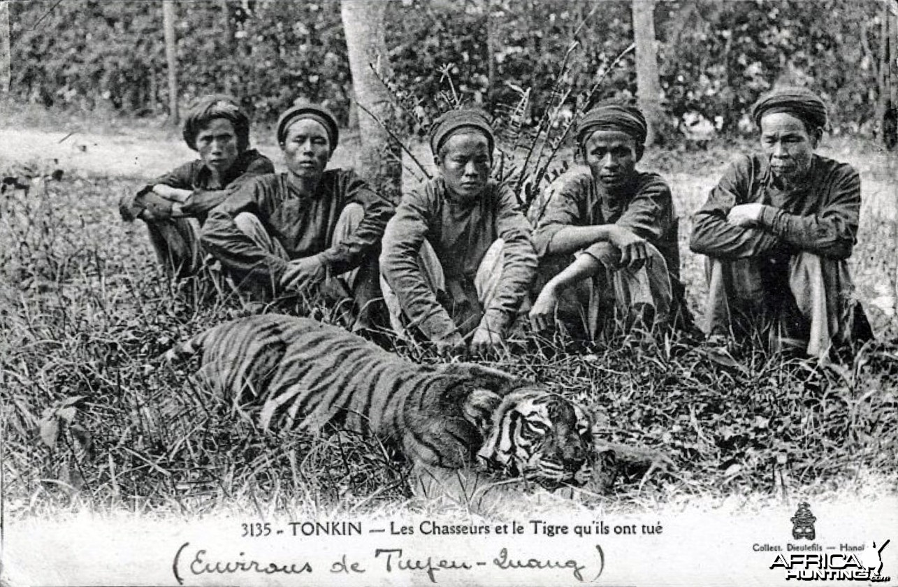 Hunters Hunting Tiger Indo-Chine Tonkin Vietnam ca 1906