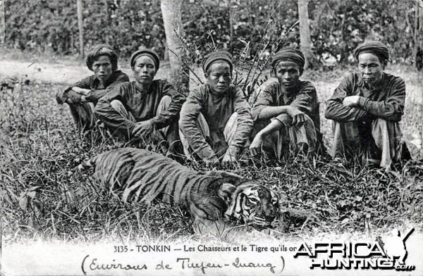 Hunters Hunting Tiger Indo-Chine Tonkin Vietnam ca 1906