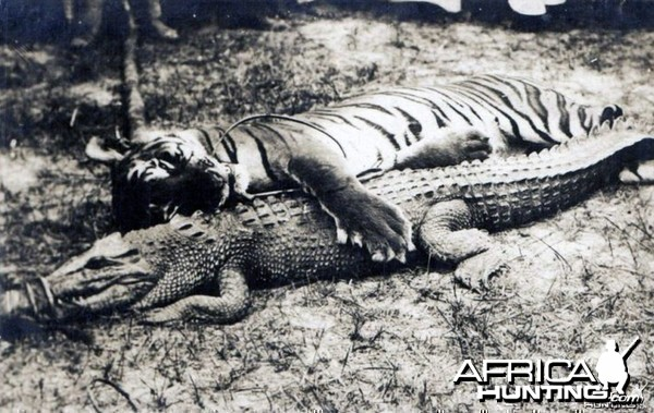 Hunting Tiger and Croc in Malaysia