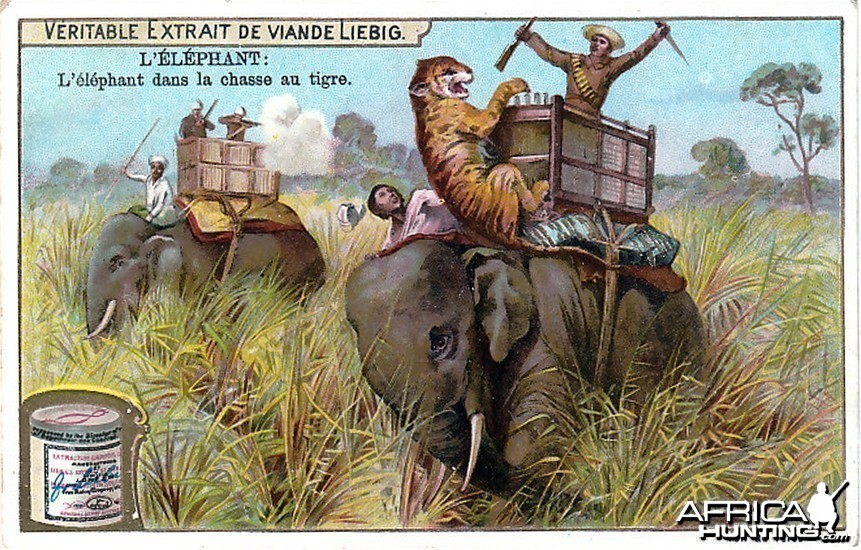 Hunting Tiger with Elephants