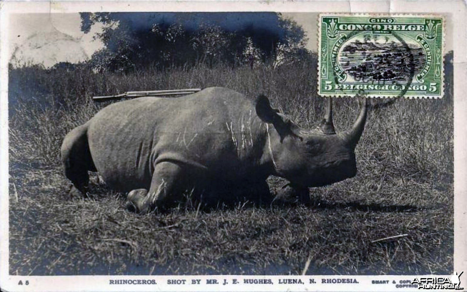 Hunting Black Rhinoceros in Rhodesia Africa ca 1919