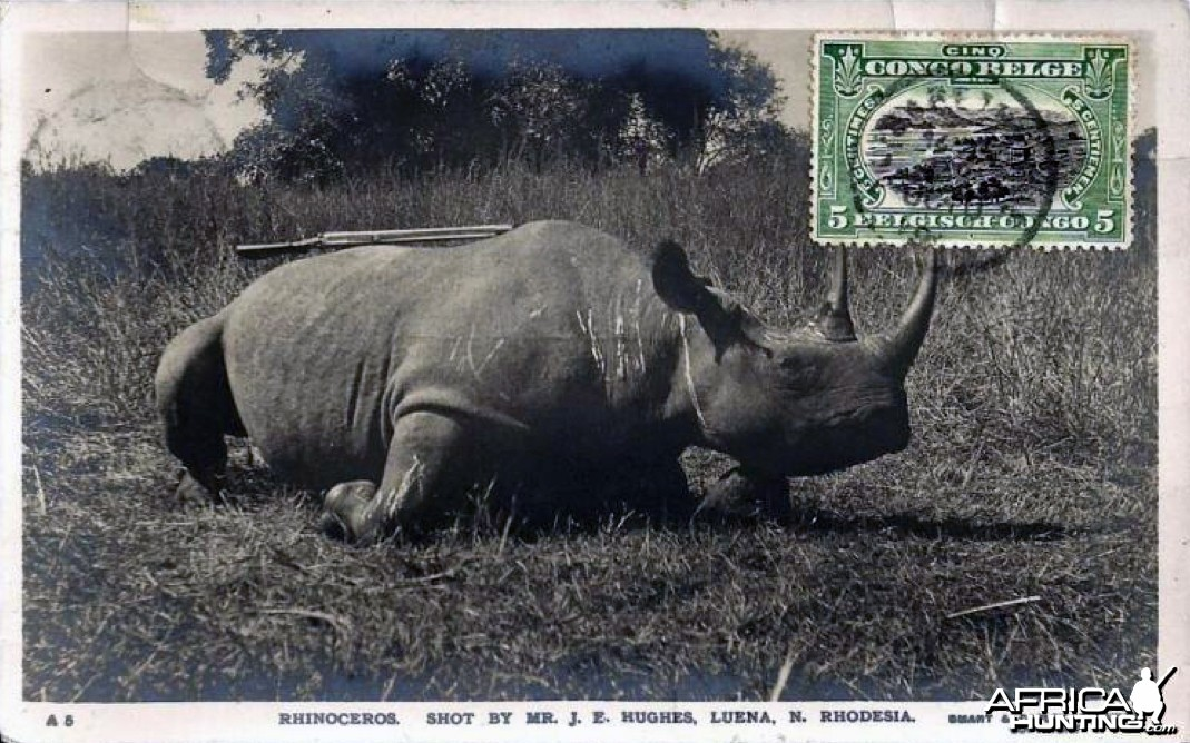 Black Rhinoceros Hunted in Rhodesia ca 1919