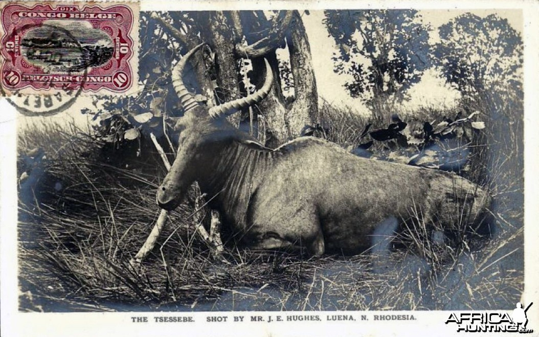 Hunting Tsessebi in Rhodesia ca 1919