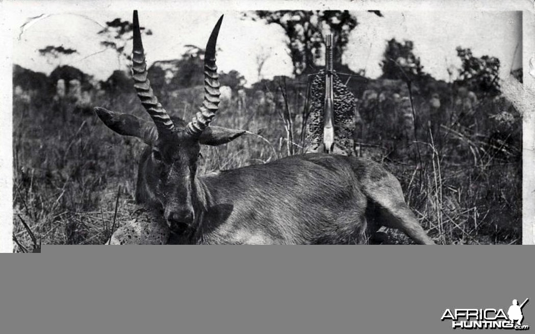 Hunting Puku in Rhodesia ca 1919