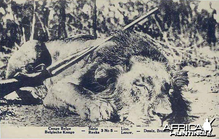 Lion Hunt in Belgian Congo