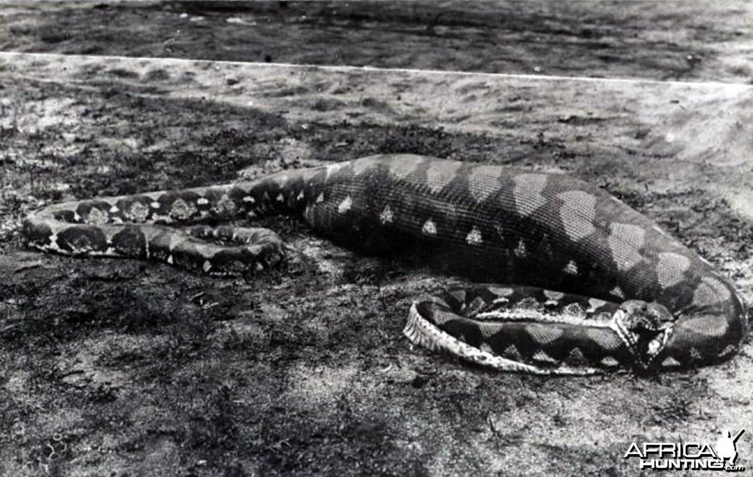 Snake Singapore ca 1920