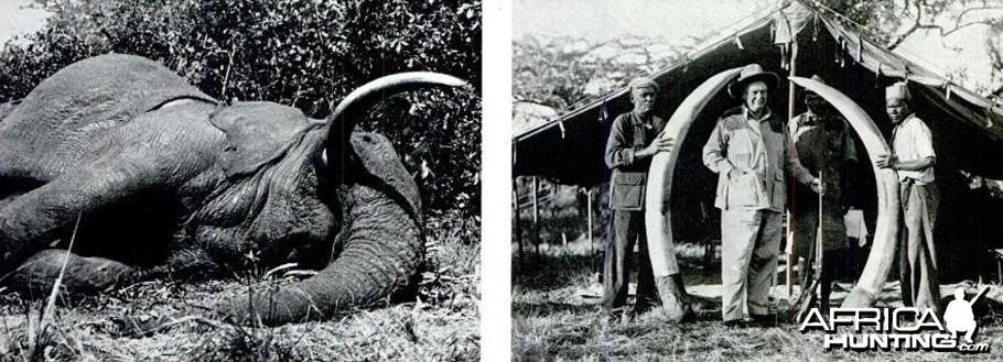 Biggest Elephant Ever Shot