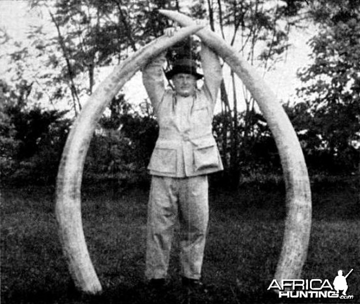 294 pounds of Elephant tusks