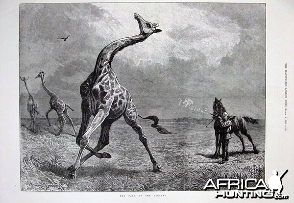 The fall of the Giraffe