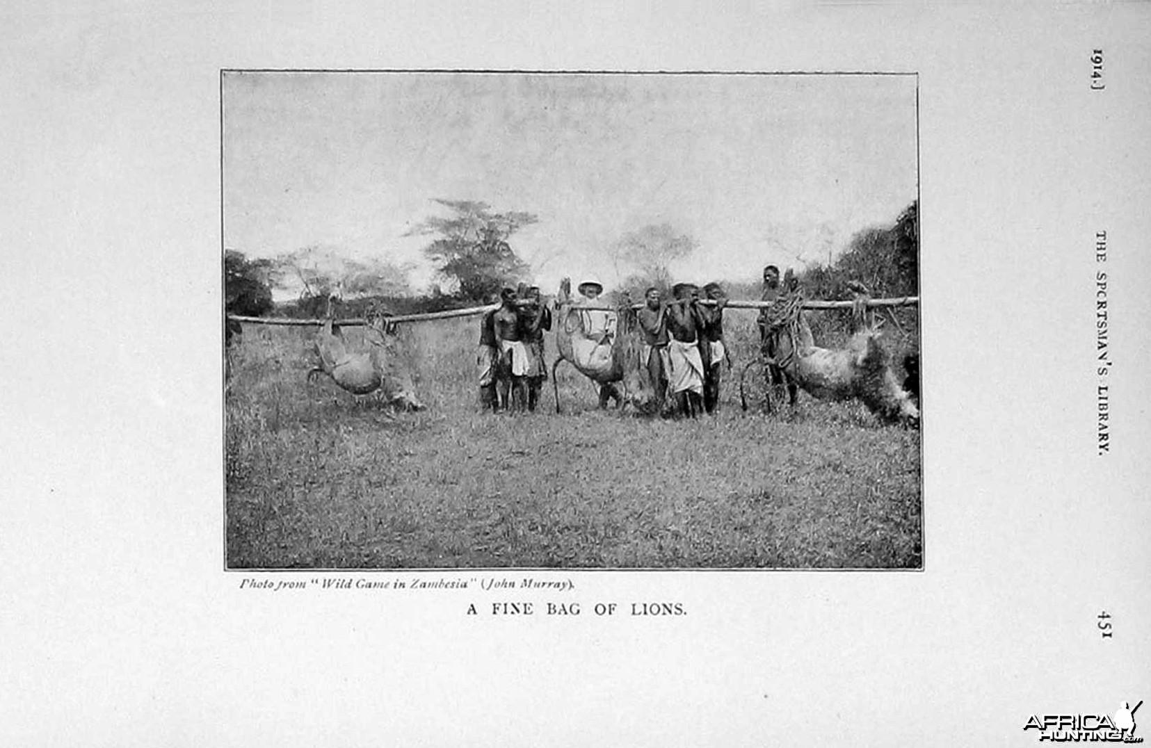 A fine bag of Lions