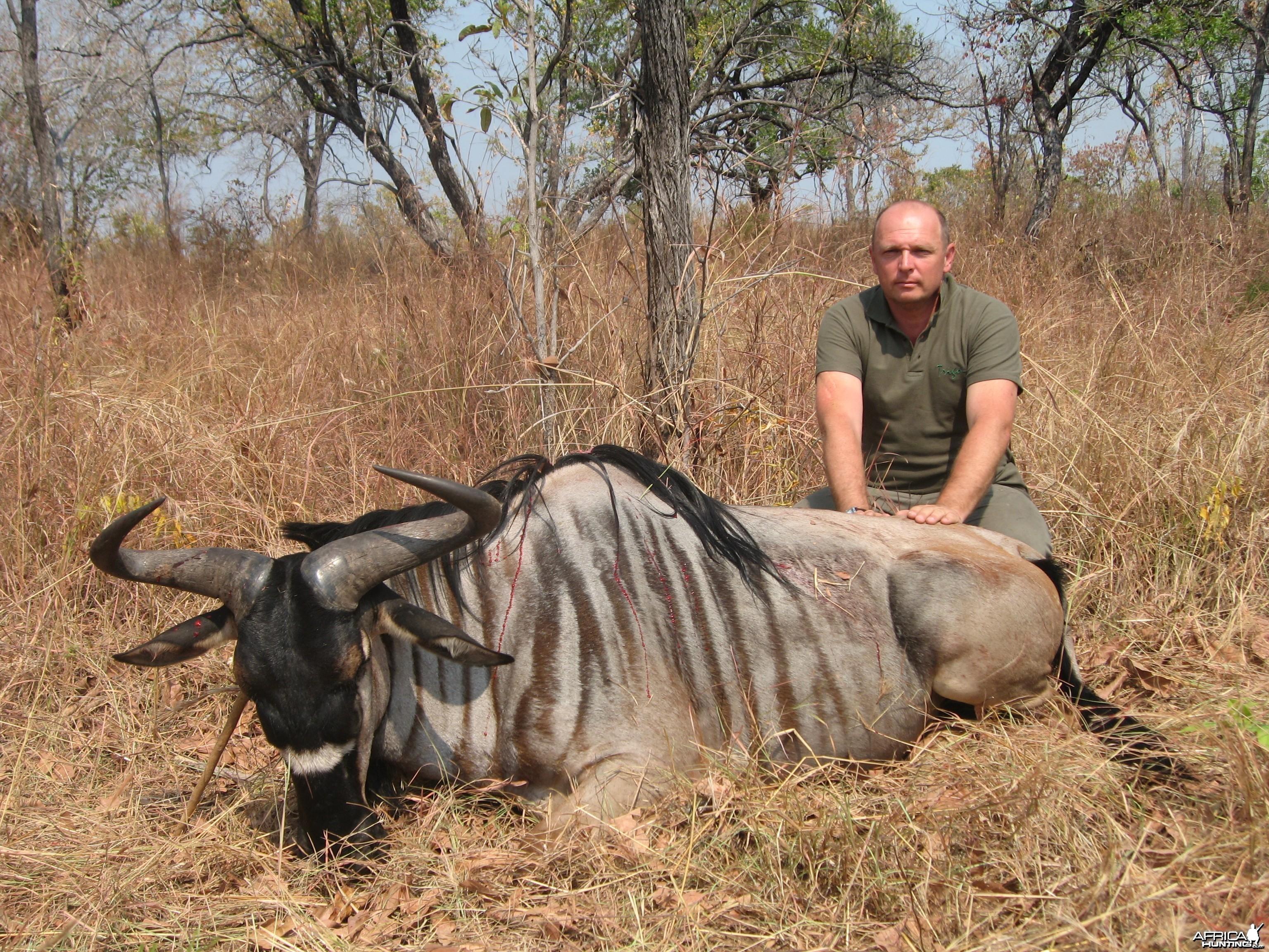 Hunting Nyasaland Wildebeest in Tanzania