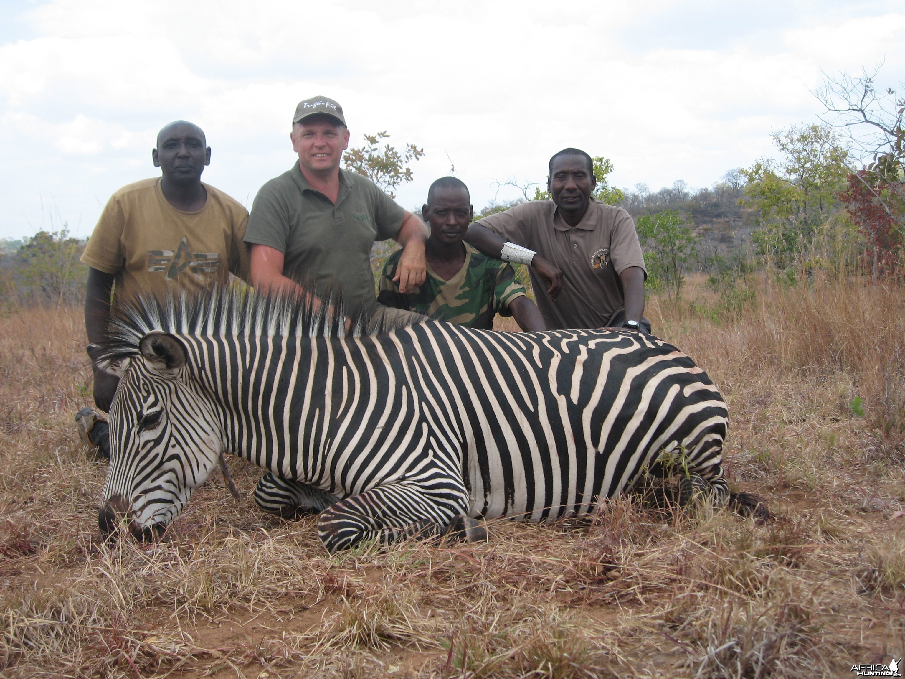 Zebra hunted in Tanzania
