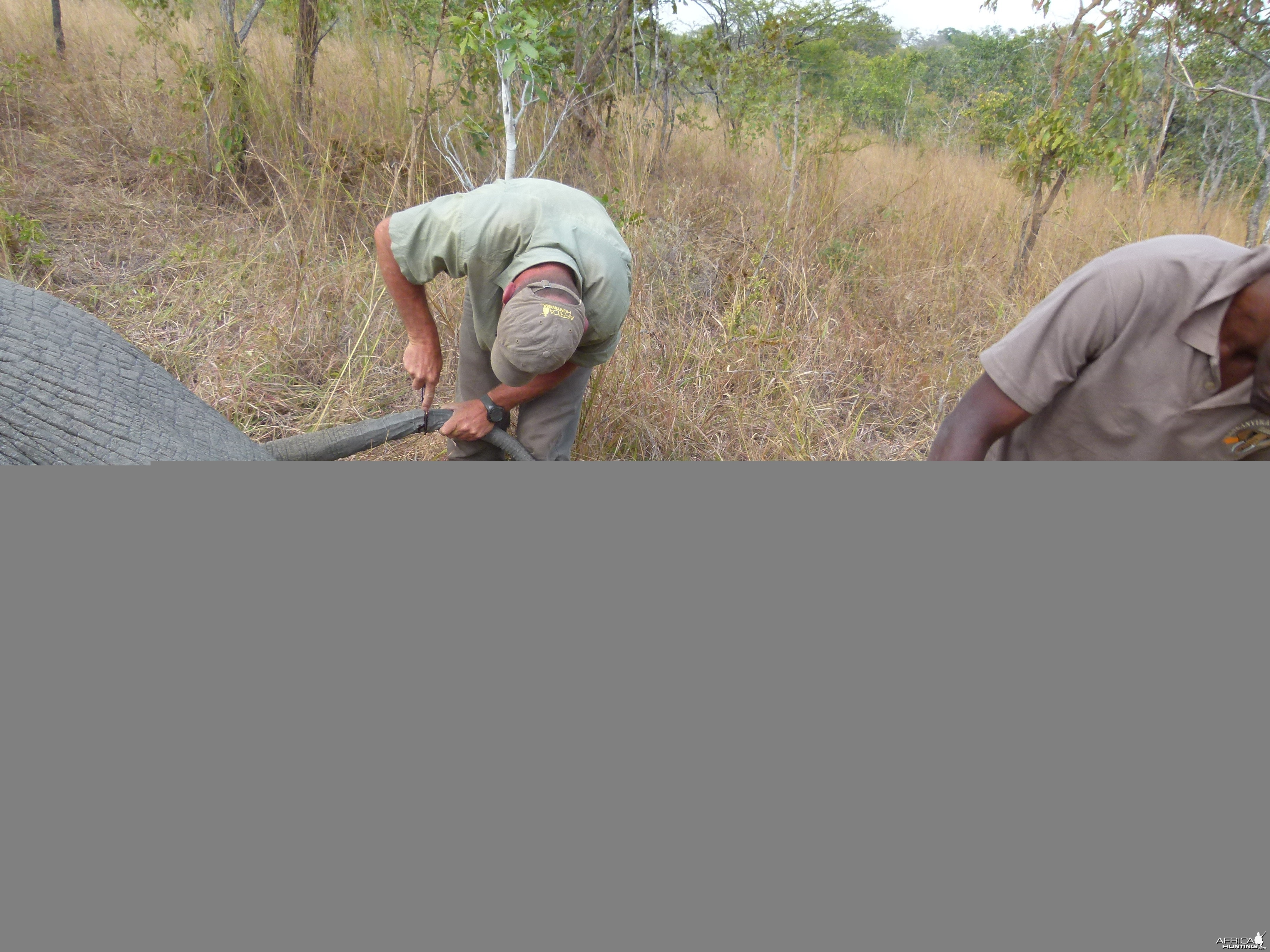 Skinning the Elephant... a big job