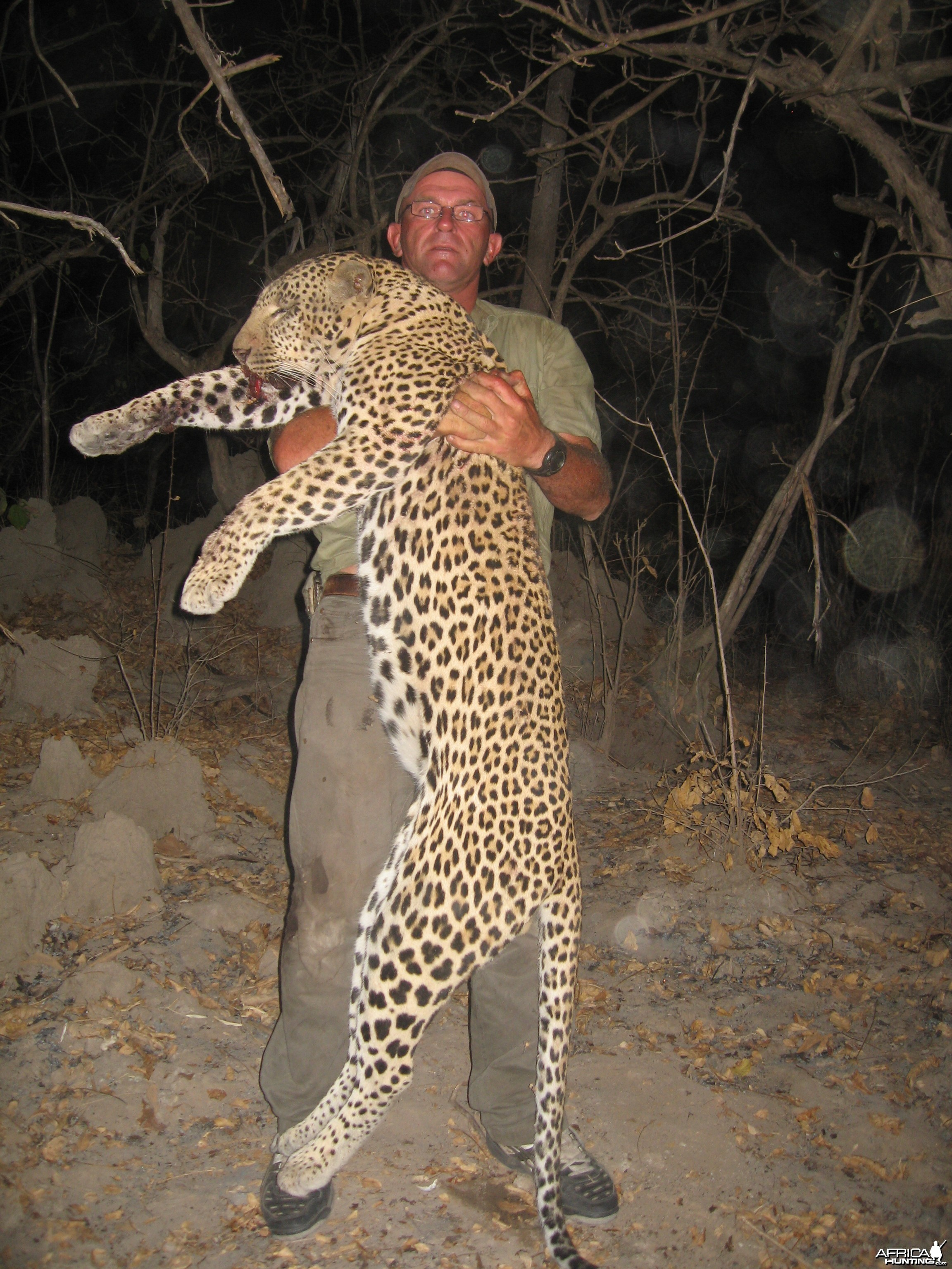 A good Leopard over 7 feet hunted in Tanzania