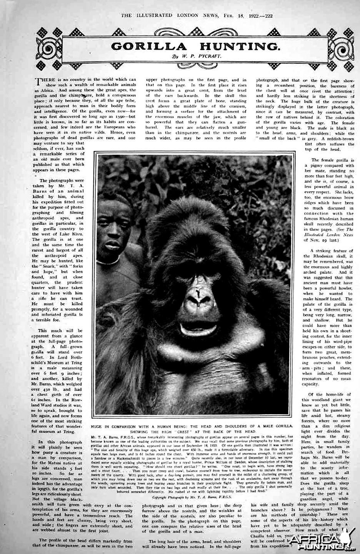 Gorilla Hunting