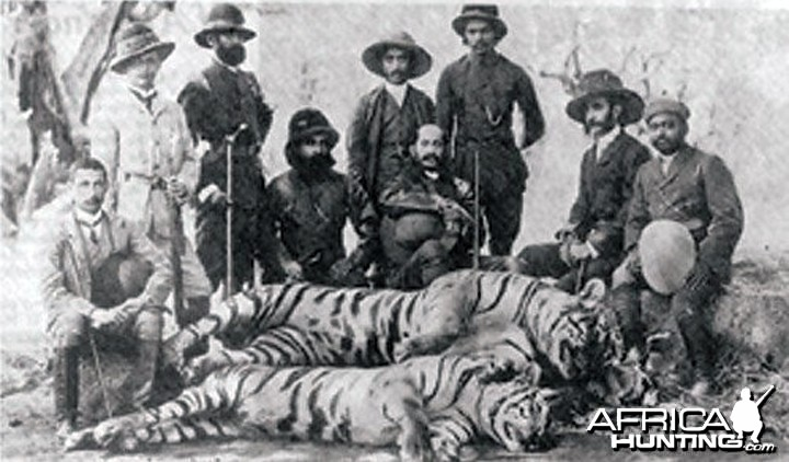 Hunting party in India with five Tigers