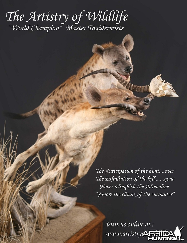 Hyena taxidermy by The Artistry of Wildlife