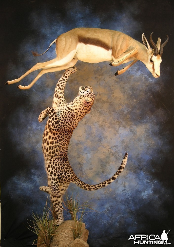 Leopard Springbok taxidermy scene by The Artistry of Wildlife