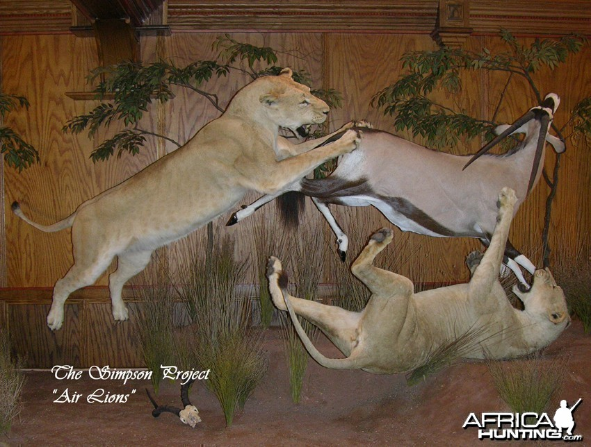 Lion Gemsbok taxidermy scene by The Artistry of Wildlife