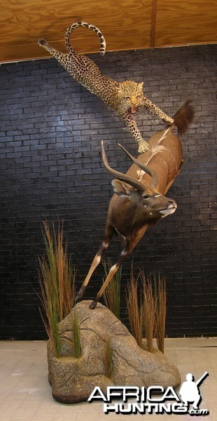 Leopard Nyala taxidermy scene by The Artistry of Wildlife