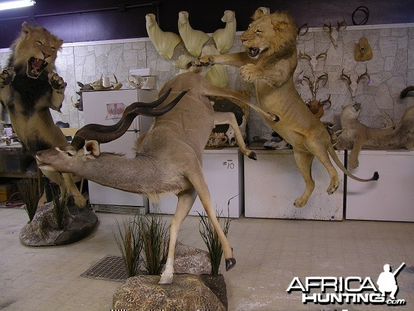Lion Kudu taxidermy scene by The Artistry of Wildlife