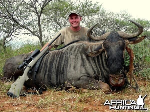 Blue Wildebeest shot near Thabazimbi, South Africa
