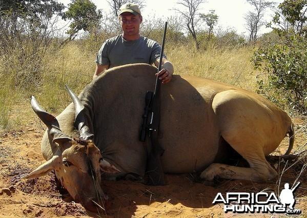 """35"""" Cape Eland taken near Grootfontein ,Namibia"""