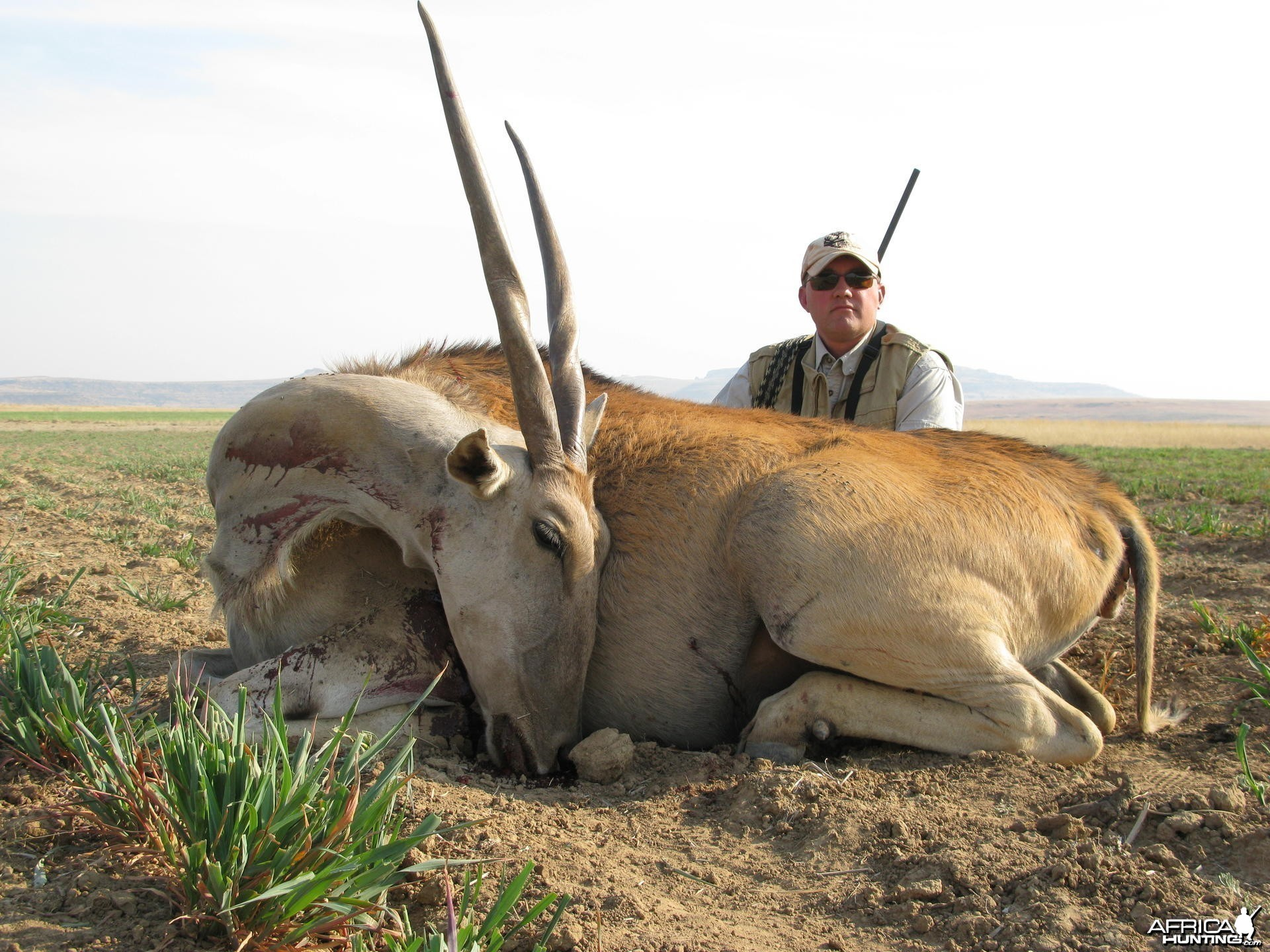 Eland cow cull at 420 meters