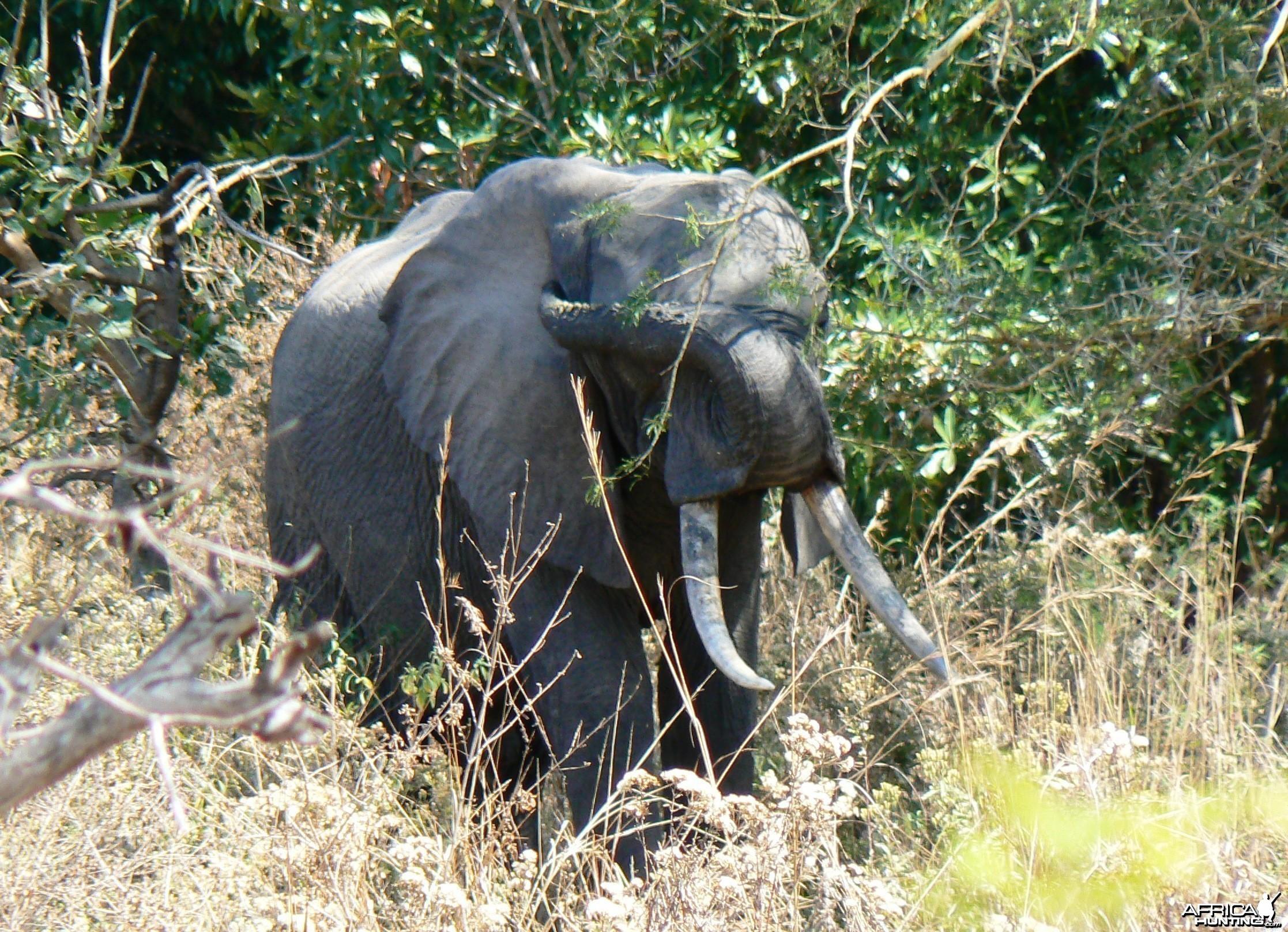 A nice Elephant, 1,86 meter... Tanzania