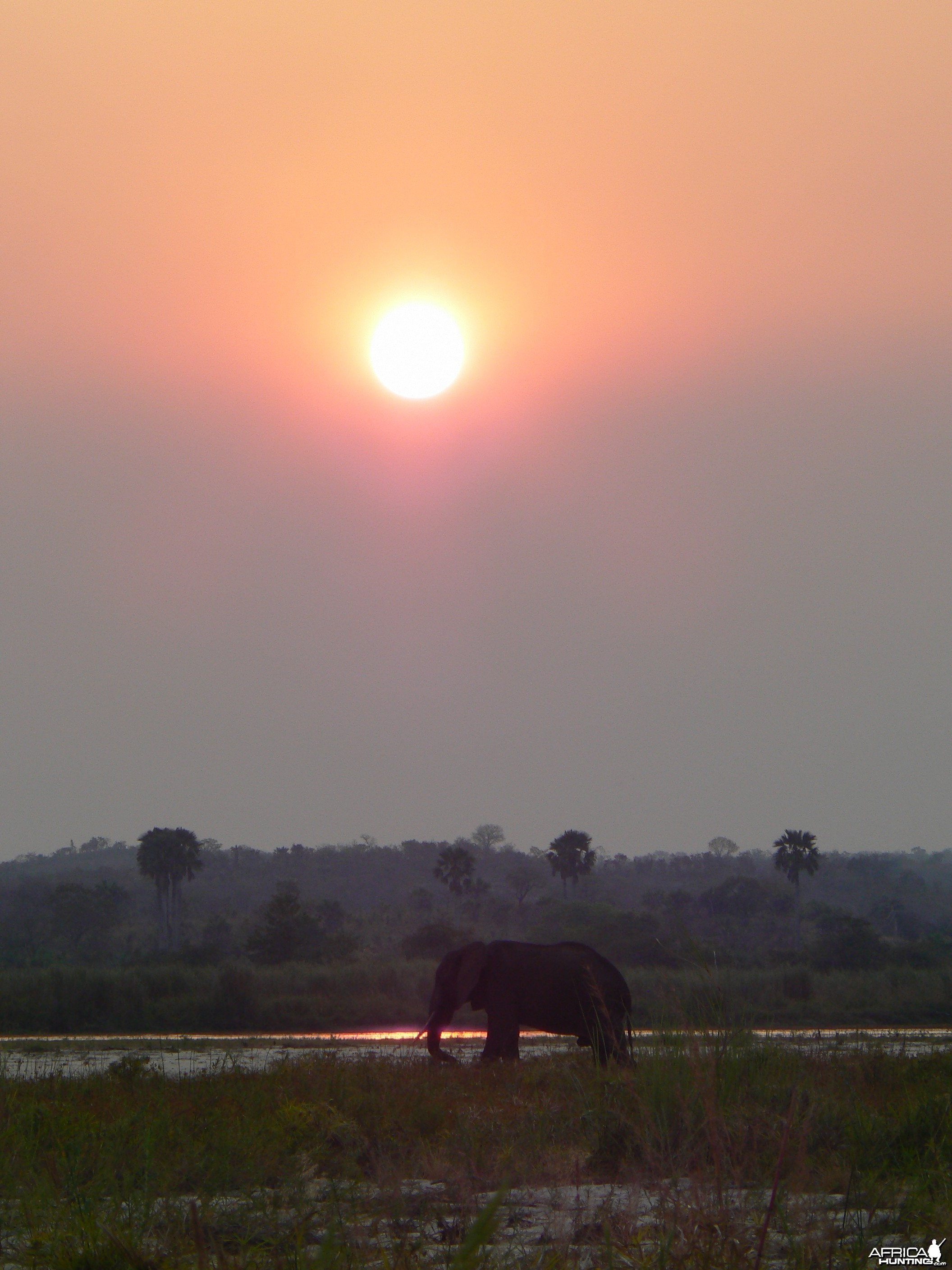 Elephant at sunset in Tanzania