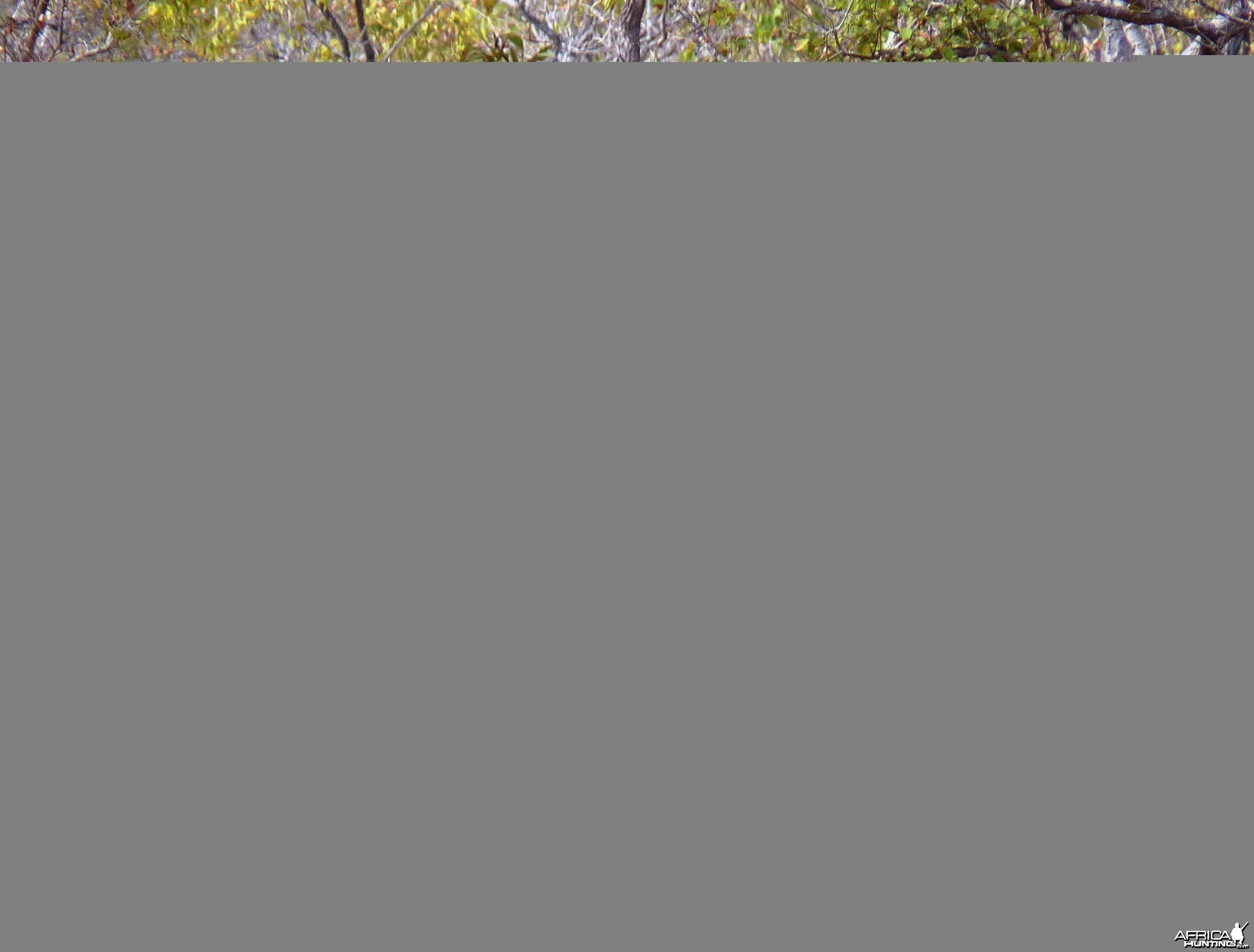 Toothpick... Elephant in Tanzania