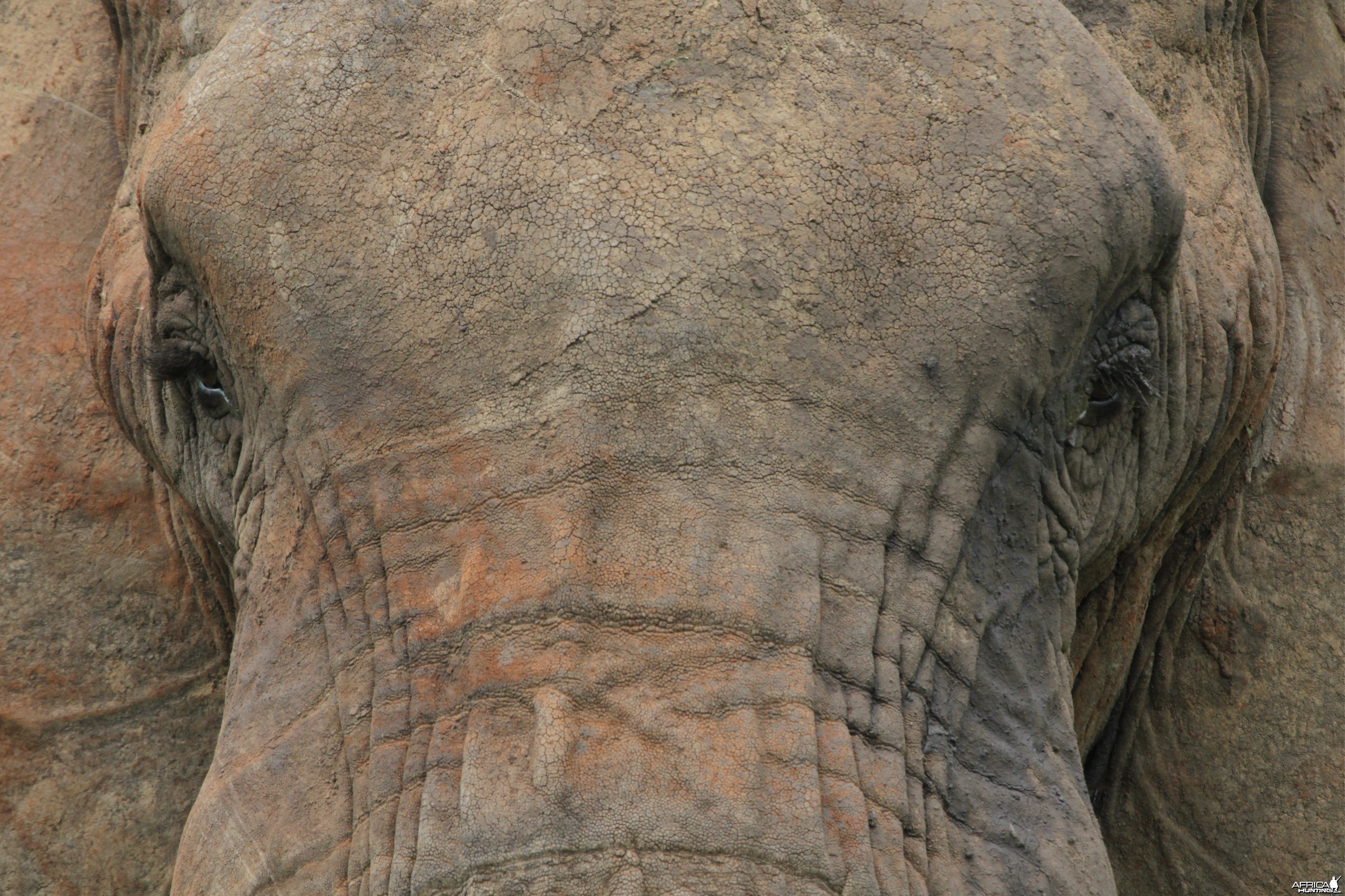 Head... Elephant in Tanzania