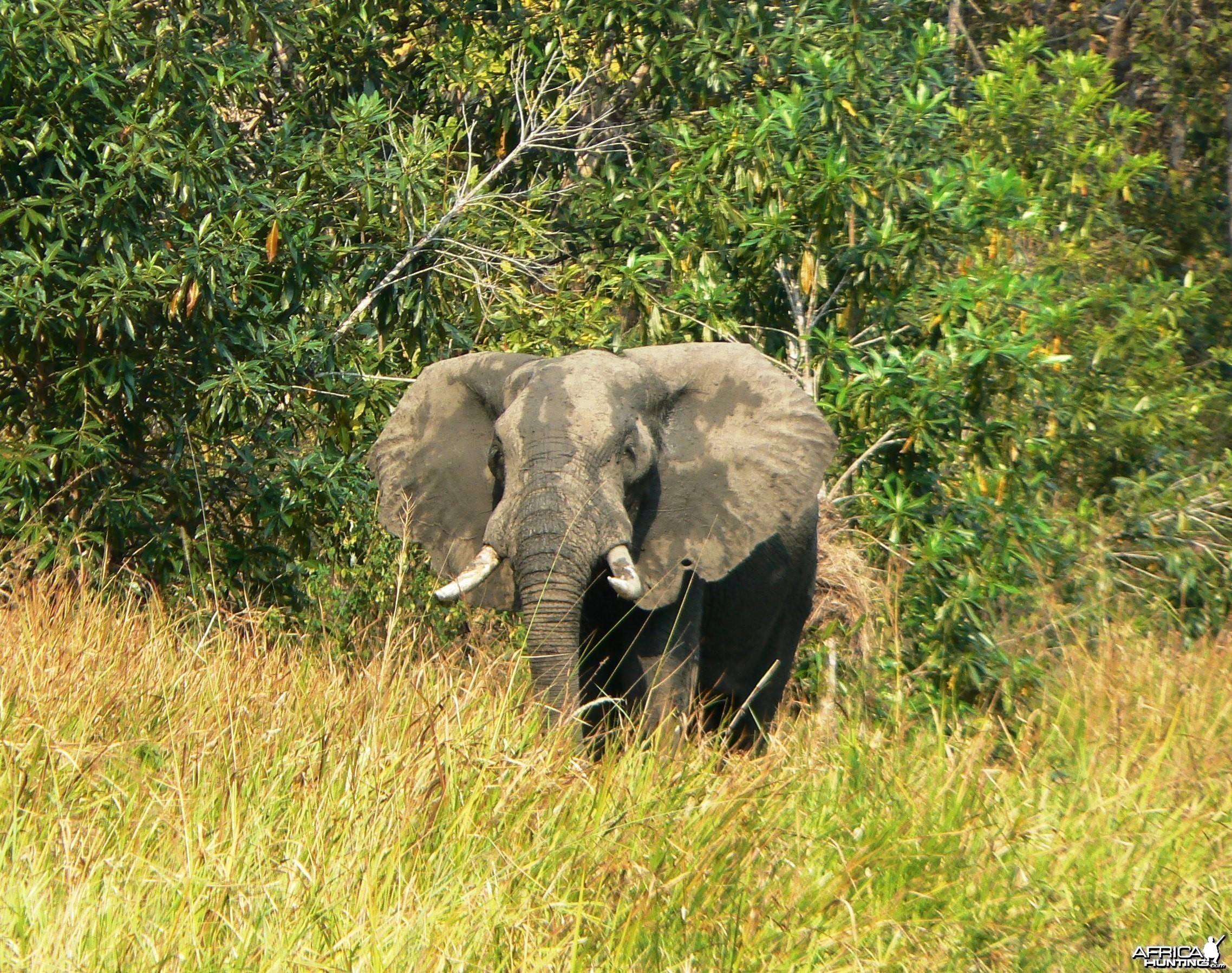 This one sees us... Elephant in Tanzania