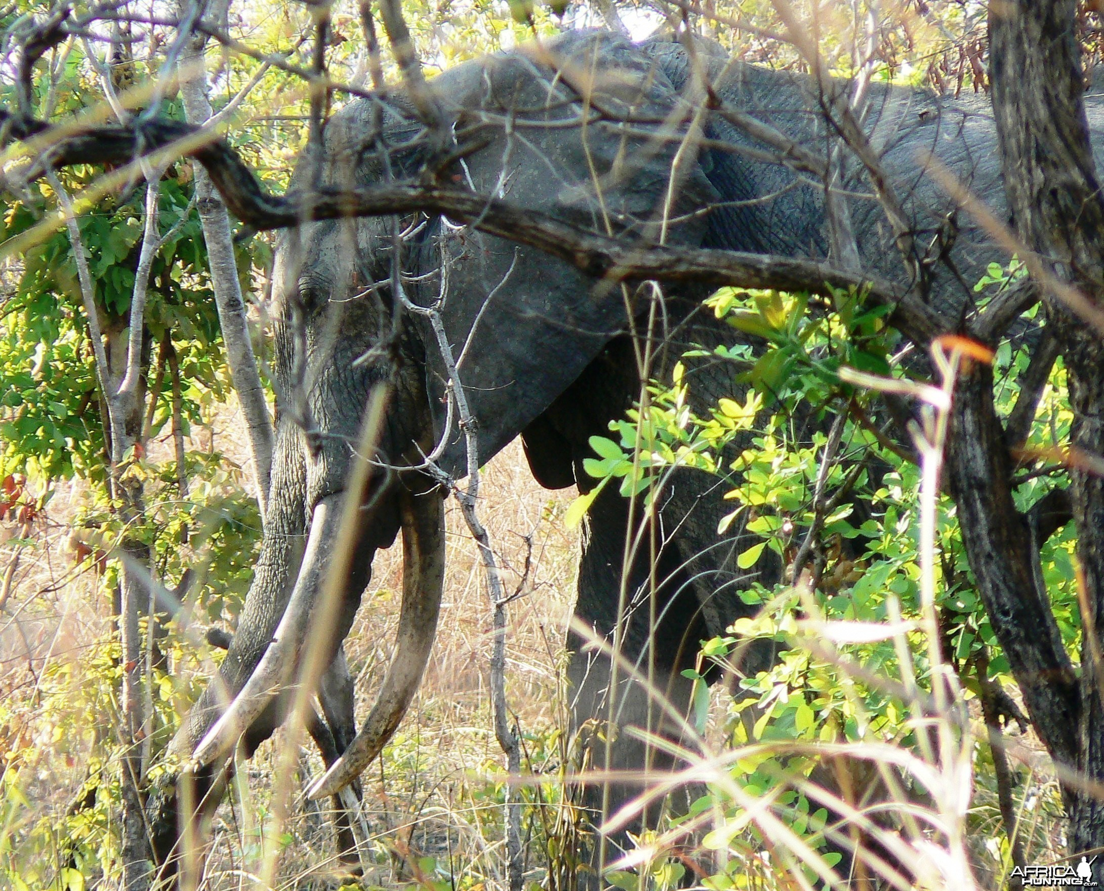 Too young!! Elephant in Tanzania
