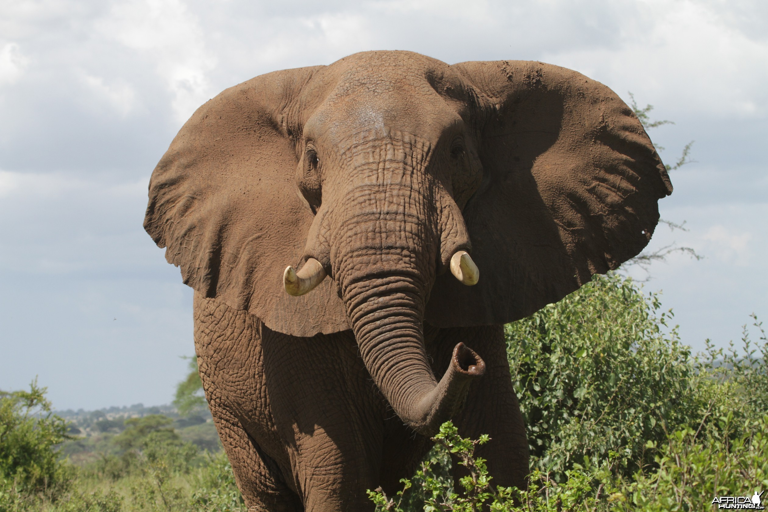 Very close encounter... Elephant in Tanzania