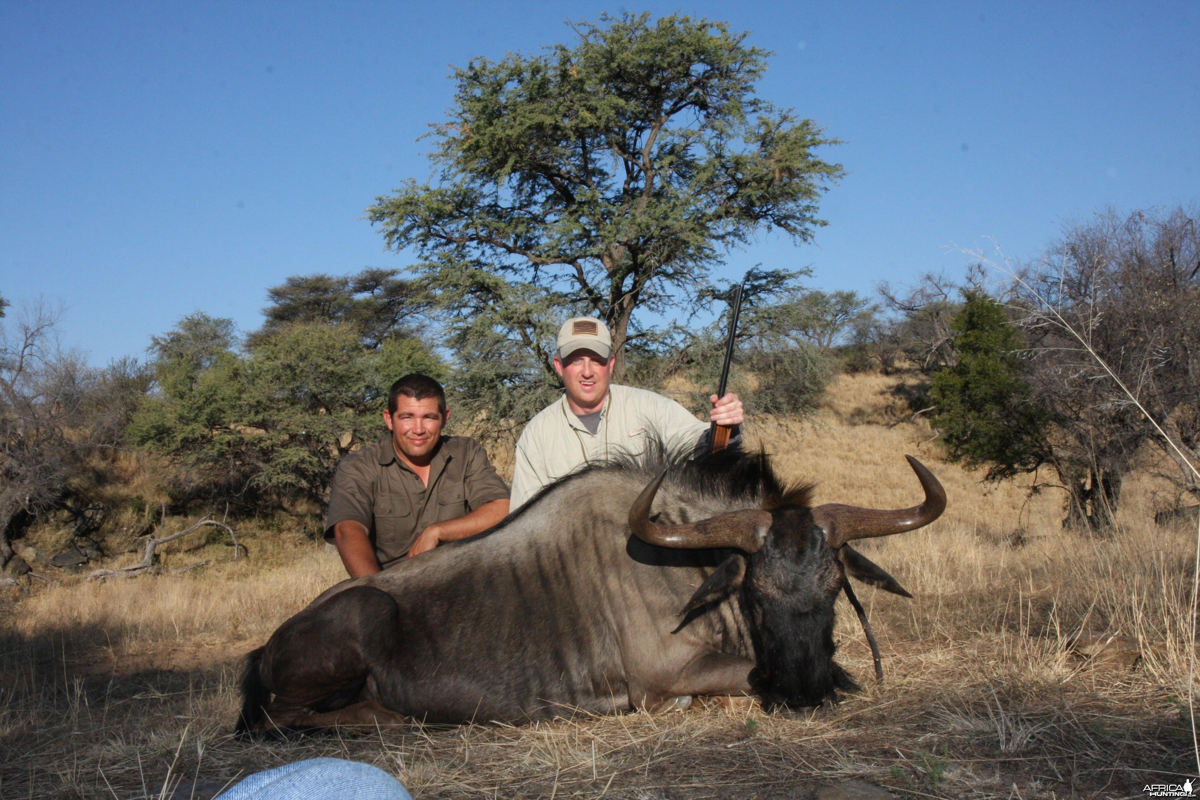 Blue Wildebeest Namibia 2011