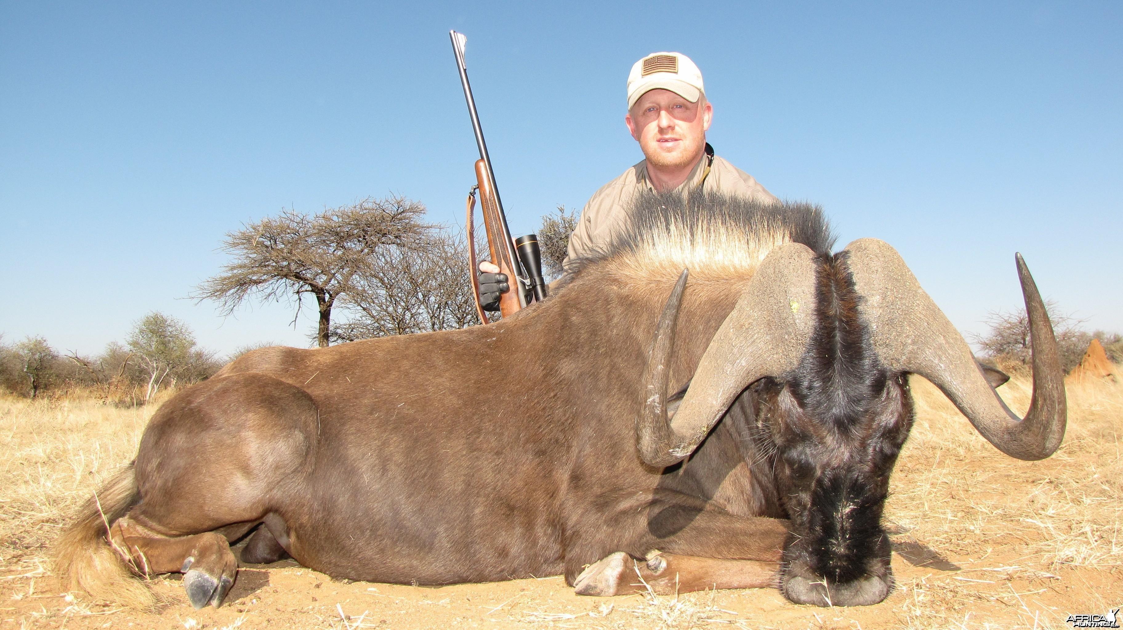 Black Wildebeest Namibia 2011 235.5 cm