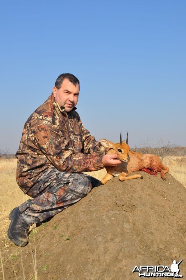 Steenbok Namibia Hunt