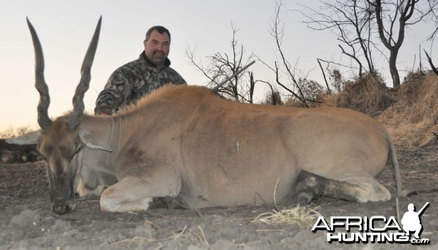 Eland cow Namibia Hunt