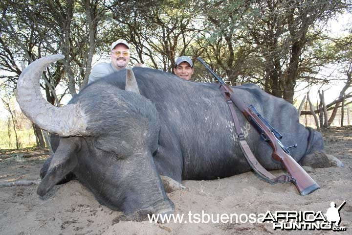 Water Buffalo - Argentina